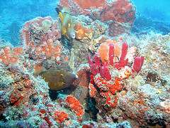 corals and sponges colorful with fishes
