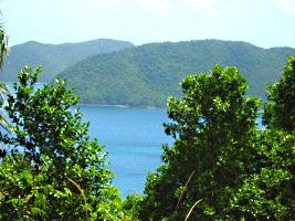 view from stj from high framed by trees of bvi